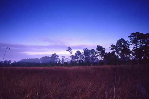 View from the Trail at Dicerandra Sanctuary, Titusville, Florida